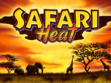 Новое демо Safari Heat